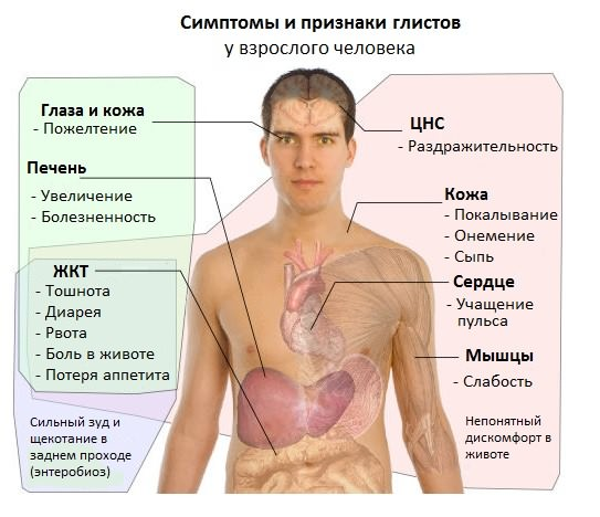 симптомы глистов в организме человека