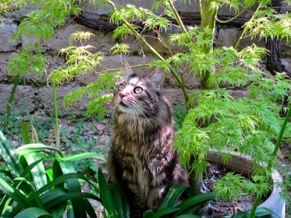 Препарат от глистов для котят