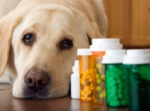 Если у собаки глисты симптомы